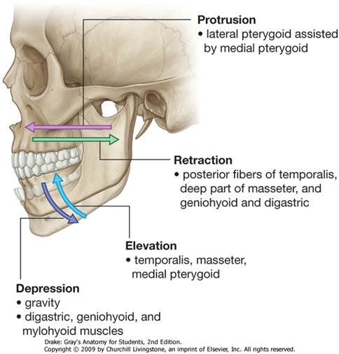 Temporomandibular Joint Disorders Tmj